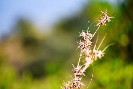 Grass and its flowers