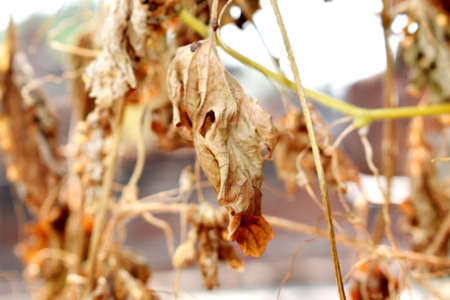 Snap of Dry Leaves