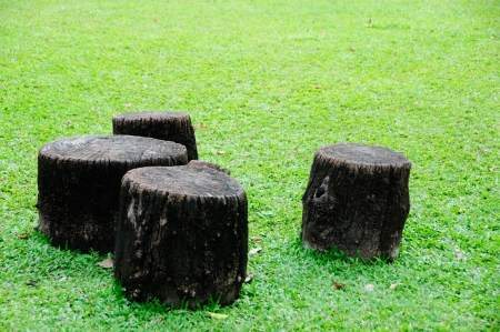 stump photo