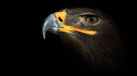 eagle on a black background