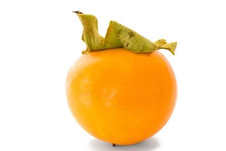 Orange ripe persimmon isolated over white background