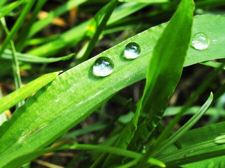 drop of dew on a green grass Stock Photo