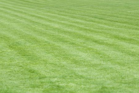 Stadium field covered with a young grass Stock Photo