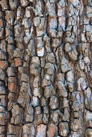 high-res texture from the bark of tree