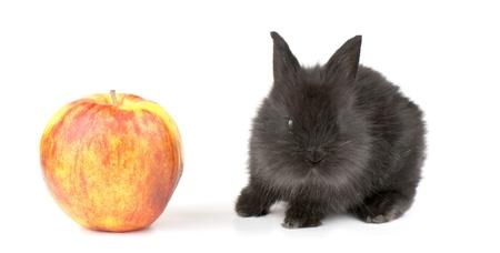 racy: Small racy dwarf black bunny isolated on white background. studio photo. Stock Photo