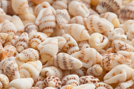 composition of exotic shells isolated on a white background closeups Stock Photo - 12587582