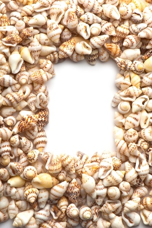 composition of exotic shells isolated on a white background closeups Stock Photo - 12587833