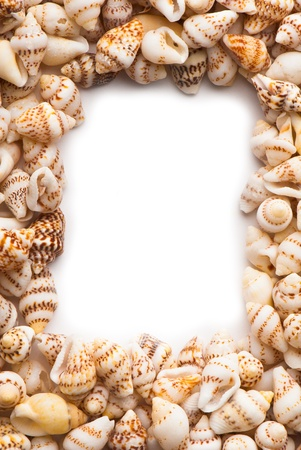 composition of exotic shells isolated on a white background closeups Stock Photo - 12587395