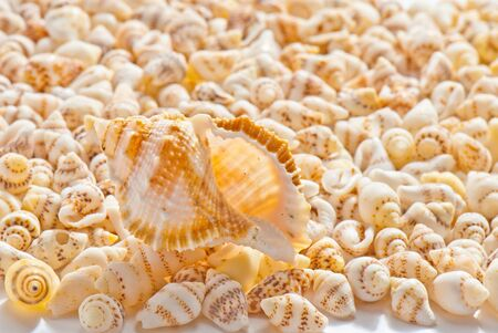 composition of exotic shells isolated on a white background closeups Stock Photo - 12587710