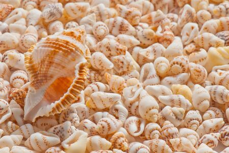 composition of exotic shells isolated on a white background closeups Stock Photo - 12587830