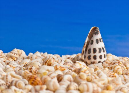 composition of exotic shells isolated on a white background closeups Stock Photo - 12587489