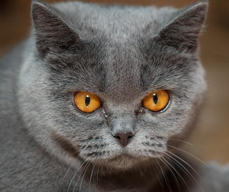 catlike: domestic animal on a beautiful background