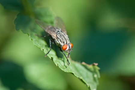 beautiful image of insects that were photographed in close-up Stock Photo - 12587792