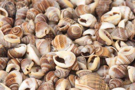 composition of exotic shells isolated on a white background closeups Stock Photo - 12587581
