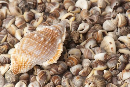 composition of exotic shells isolated on a white background closeups Stock Photo - 12587631