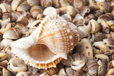 composition of exotic shells isolated on a white background closeups Stock Photo - 12587454
