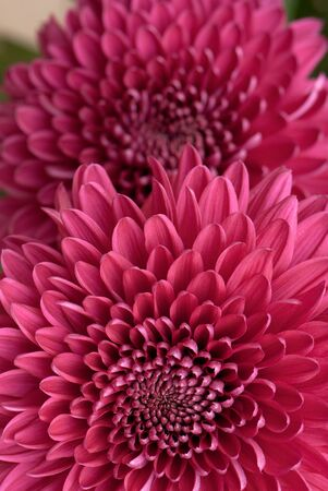 beautiful background of fresh flowers photographed in the studio Stock Photo - 12587839