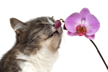 cat and pink orchid on white background