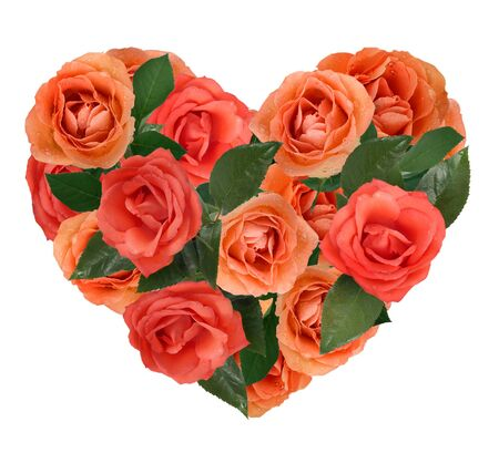 heart from roses on white background  photo