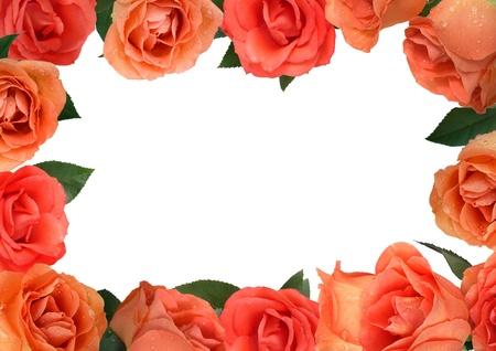flor de durazno: marco de las rosas con gotas de roc�o