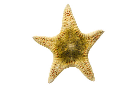 seastar: Seastar or Starfish on white  Stock Photo
