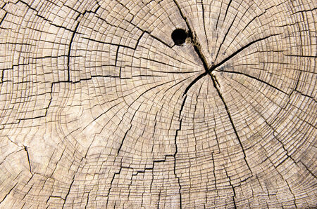 wood texture cut tree trunk photo