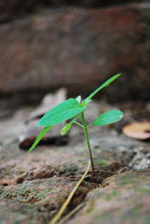 Seedling growth. Stock Photo