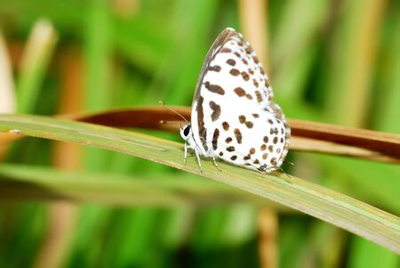 butterfly caught in the blade of grass in the morning