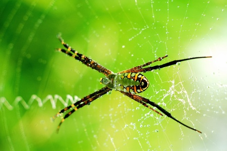 pavouk s ranní rosou. Reklamní fotografie