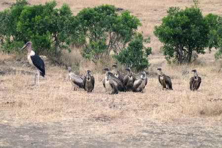 Wildlife of the Masai Mara Stock Photo