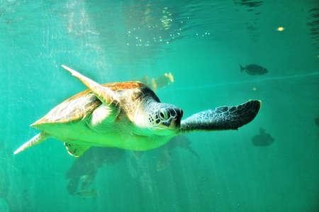flit: Sea turtles
