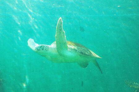 Sea turtles Stock Photo - 13662655