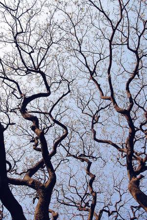 Trees in winter  Reklamní fotografie