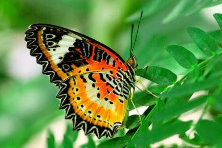 prachtige vlinder met groene achtergrond
