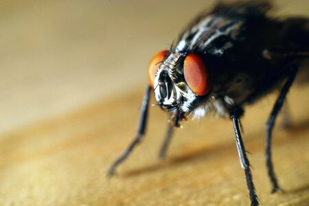 close up of fly Stock Photo - 14947549