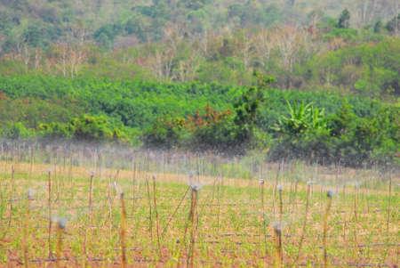 sprinkler na plantáži