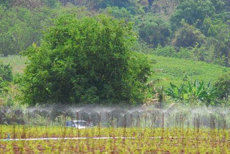 sprinkler at plantation