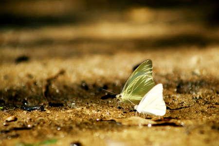 Butterfly vylézt na kámen