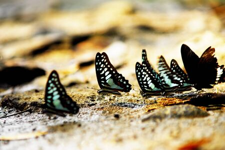 Butterfly climb the stone