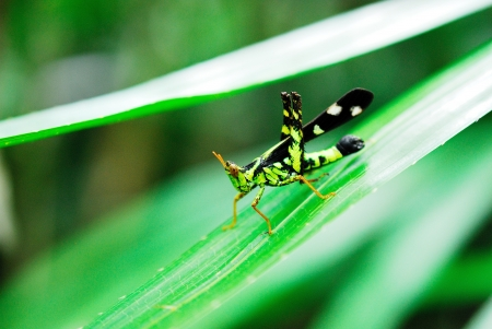 cling: grasshopper cling on the grass Stock Photo