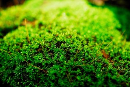 adhere: moss adhere to the stone