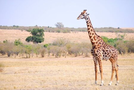 Wildlife of the Masai Mara  photo