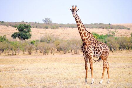 Wildlife of the Masai Mara