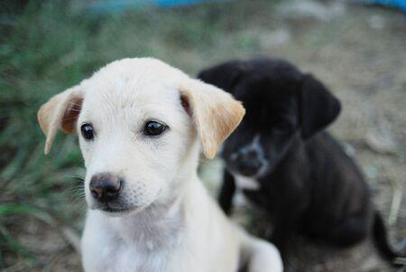 head short of pretty dog