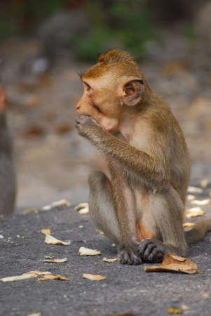 opice při odpočinku