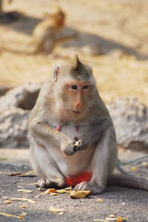 misbehave: monkeys while relaxing