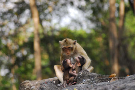 monky zatímco relaxovat se svými dětmi
