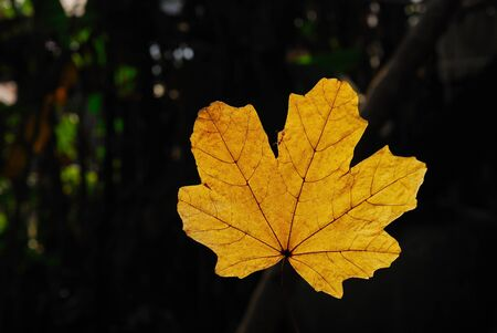 a leaf with sunlight reflection Stock Photo