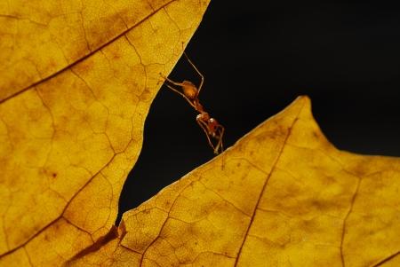 ant climb on leaf