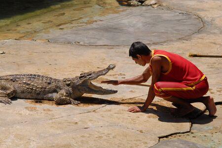 crocodile hunter show at crocodile farm  samutprakarn Thailand